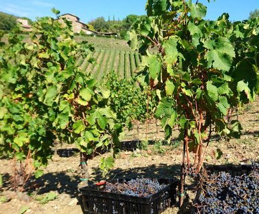 http://www.hotelvillacampomaggio.it/wp-content/uploads/2016/05/farms.jpg